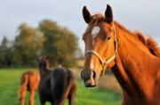 Φάρμακα για ιπποειδή - Προϊόντα περιποίησης Τιμοκατάλογος