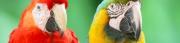 Διατροφικά για τις ασθένειες των ωδικών πτηνών - Ερπετών Τιμοκατάλογος